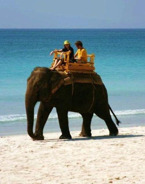 474px-India_Tourism_Elephant