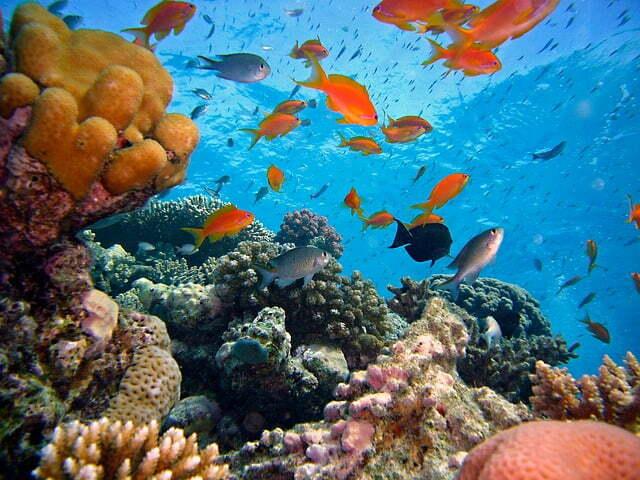 diving-712634_640