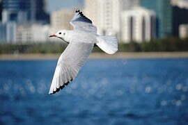 seagull-768695__180
