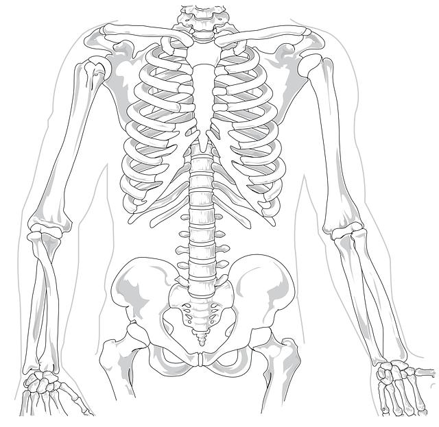 skeleton-41569_640
