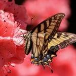 butterfly-108616_1920