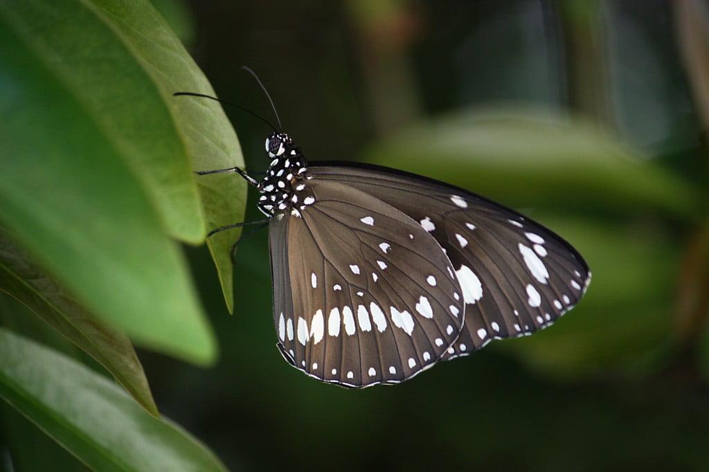 butterfly-686117_1920