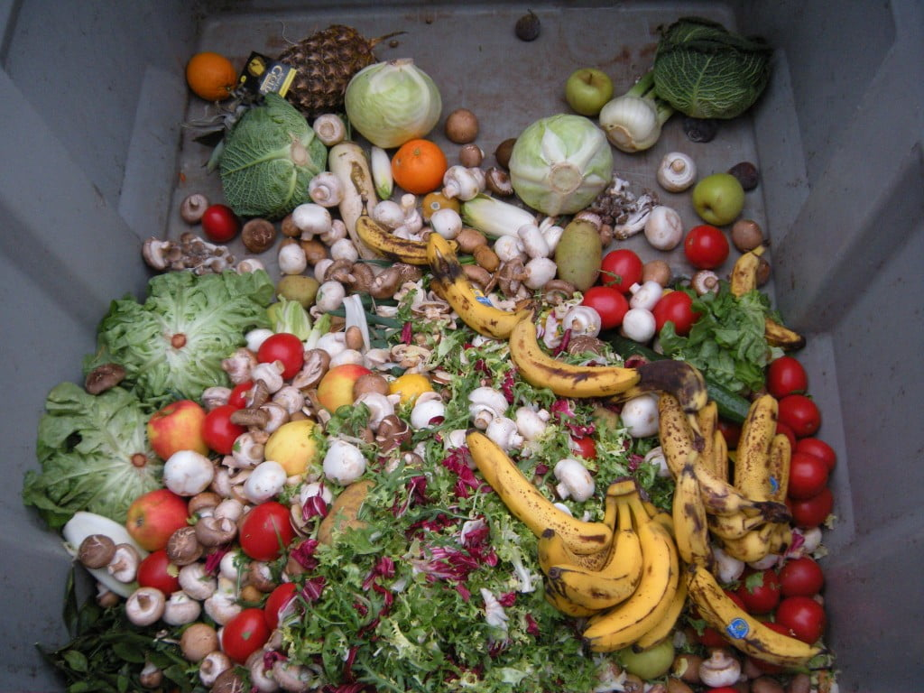 Trashed_vegetables