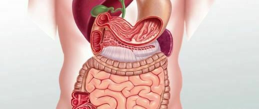 Human Liver: The largest body organ