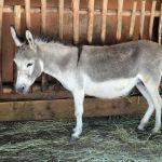 donkey-316467_960_720