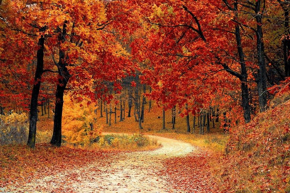 autumn leafs fall