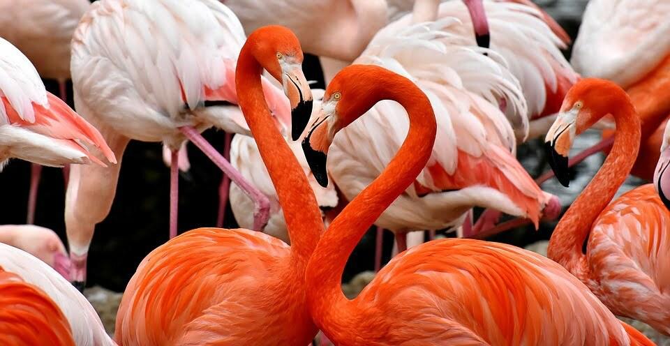 flamingo-3309628_960_720