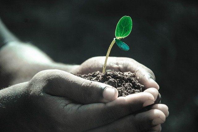 life plant sapling