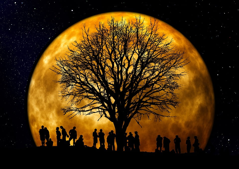 tree and people at night